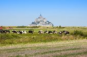 pic of mont saint michel  - Mont saint Michel  - JPG