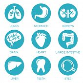 Human organs - vector icons collection