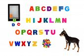 Alphabet, Electronic Book  And  Toy-terrier Puppy On White Background.