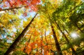 pic of angles  - A low angle view of the bright sun shining through colorful autumn leaves on trees in a forest - JPG