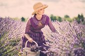 pic of lavender field  - Woman in purple dress and hat with basket in lavender field  - JPG