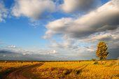 Cental Ukraine landscape