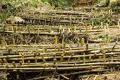 Bamboo Dam