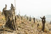 foto of slash  - Slash And Burn Cultivation - JPG