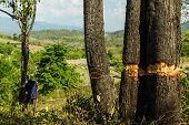 image of slash  - Slash And Burn Cultivation - JPG