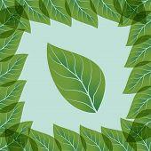 illustration transparent green leaves
