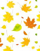 picture of barberry  - Background with flying autumn leaves of a birch - JPG