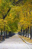 Park alley in autumn