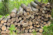 Heap Of Firewood