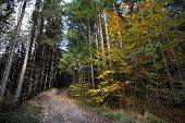 Постер, плакат: Sunny Autumnal Forest Vs Ill And Acidic Forest