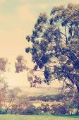 Retro Vintage Style Australian Landscape With Large Eucalyptus Gum Tree Overlooking Farming And Vine