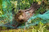Forest songbird passerine.