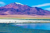 Atacama Desert with Flamingos, Chile