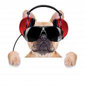Dj Disco Dog