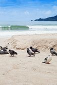 Pigeons at the beach