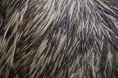 Porcupine body with spines - background