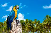 Blue and Yellow Macaw in Brazil