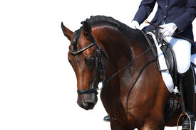 picture of horse-riders  - Bay horse portrait during dressage competition isolated on white - JPG