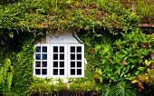 foto of english ivy  - old house overgrown with beautiful plants and flowers - JPG