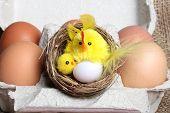stock photo of bird egg  - Easter composition - JPG