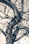 image of mystery  - Tree of Mystery - JPG