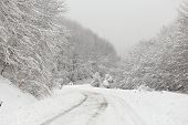 foto of snowy-road  - Icy road with snowy trees on sides of it  - JPG