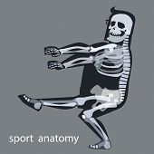 picture of skeleton  - Skeleton anatomy sport male gymnastics - JPG
