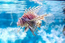 picture of aquatic animals  - The underwater world - JPG