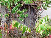 Beauty Of Abandonmentside Entrance To The Barn