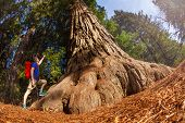stock photo of redwood forest  - Fisheye view of man pointing at big tree in Redwood California during summer sunny day - JPG