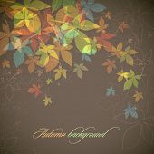Autumn Background | Falling Leaves | EPS10 Compatibility Required