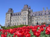Red Tulips And The Parliament
