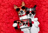 Valentines Couple Of Dogs In Love poster