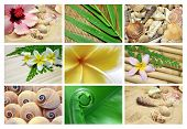 Collection of sample sized tropical themed backgrounds