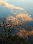 Reflection Of Sky
