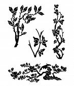 image of japanese magnolia  - Vector of Chinese Traditional Magnolia tree silhouettes - JPG