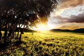 Grove in beautiful golden sunset