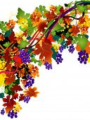 autumnal background with grapes