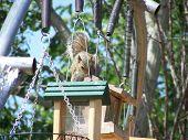 Foraging Squirrel