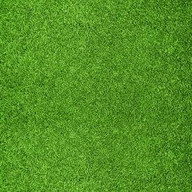 stock photo of grass  - Beautiful green grass texture from golf course - JPG