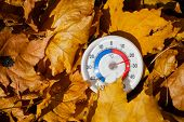 Outdoor thermometer  with celsius scale in golden maple leaves showing warm temperature - hot indian poster