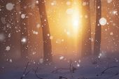 Winter Christmas Nature Background. Sunshine In Winter Forest. Snowfall In Frosty And Foggy Forest. poster