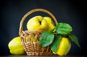 Ripe Fruit Quince Isolated On Black Background poster