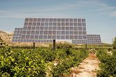Solar Panels On An Orange Plantation In Spain