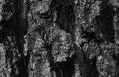 Oak Bark poster