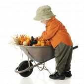A side view of a young preschooler dressed in a hat and fall colors, attempting to pull a black cat from among the fall foliage in a wheelbarrow.  On a white background.