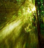 Image of misty rainforest and bright sun beams through trees branches, autumn dark woodland, shine m