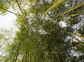 Under Bamboo Forest