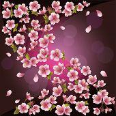 Background With Sakura - Japanese Cherry Tree, Vector