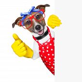 image of up-skirt  - housewife dog with rubber gloves and thumb up behind a blank space - JPG